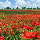 Poppy Field by Mike Paget