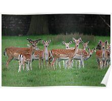 Multi-Headed Deer Herd! Poster