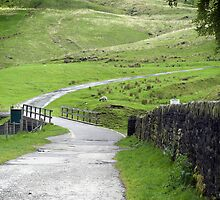 Winding Road by Jude Gidney