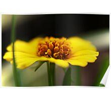 Little Yellow Flower III Poster