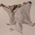 Flying Squirrel by Angie Schlauch