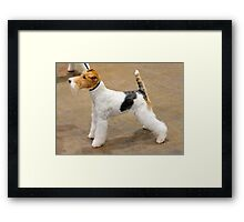 Young Fox Terrier Wire Coat Framed Print
