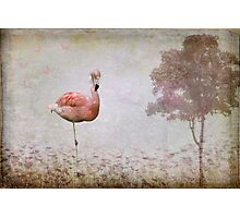 Flamingo Photographic Print