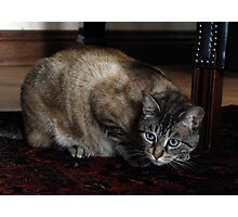 Old Blue Eyes, The MIghty Hunter Photographic Print