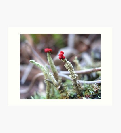 Tiny Red Tops Art Print