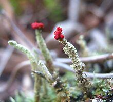 Tiny Red Tops by Vanessa Barklay