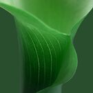green calla ... by SNAPPYDAVE