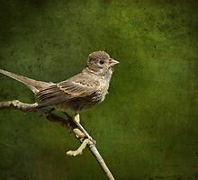 Fledgling Finch Awaiting Breakfast by Bonnie T.  Barry