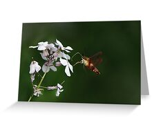 Amazing HummingBird Moth Greeting Card