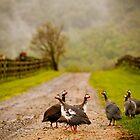 Guinea Fowl, Tralfamadore Farm by Steven David Johnson