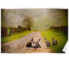Guinea Fowl, Tralfamadore Farm Poster