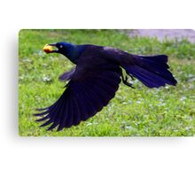 *FLIGHT OF THE GRACKLE* Canvas Print