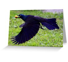 *FLIGHT OF THE GRACKLE* Greeting Card