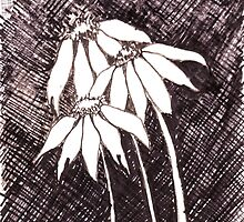 Daisies Black ink sketch by Maree  Clarkson
