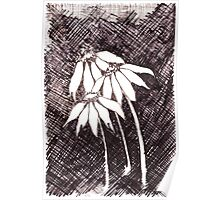 Daisies Black ink sketch Poster