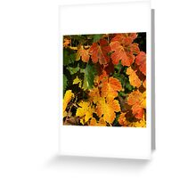 Autumn colors in the vineyard Greeting Card