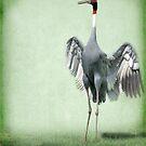 Sarus Crane by Kimberly Palmer