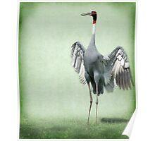 Sarus Crane Poster