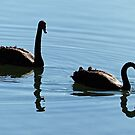 Swan Reflection by DarthIndy