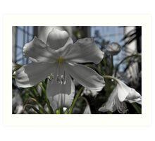 Glasshouse Orchid Art Print