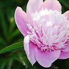 Floral Pink by Kklove