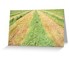 Hay Greeting Card