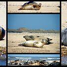 Seals by CinB