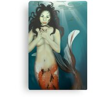 The Coy Koi Metal Print