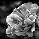 Pretty in Grey 1 by Ghelly