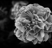 Pretty in grey 2 by Ghelly