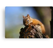 Baby Squirrel Canvas Print