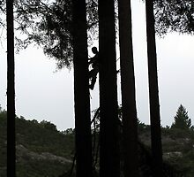 Silhouette of Tree Trimmer by CaliWildViolet