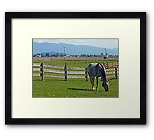 A horse grazing in Skagit Valley Framed Print