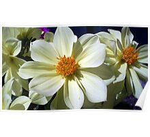 Splendid flowers Poster
