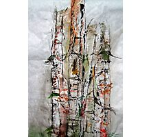 Bamboo in Color Photographic Print