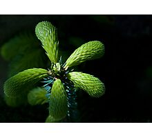 In The Spotllight Photographic Print