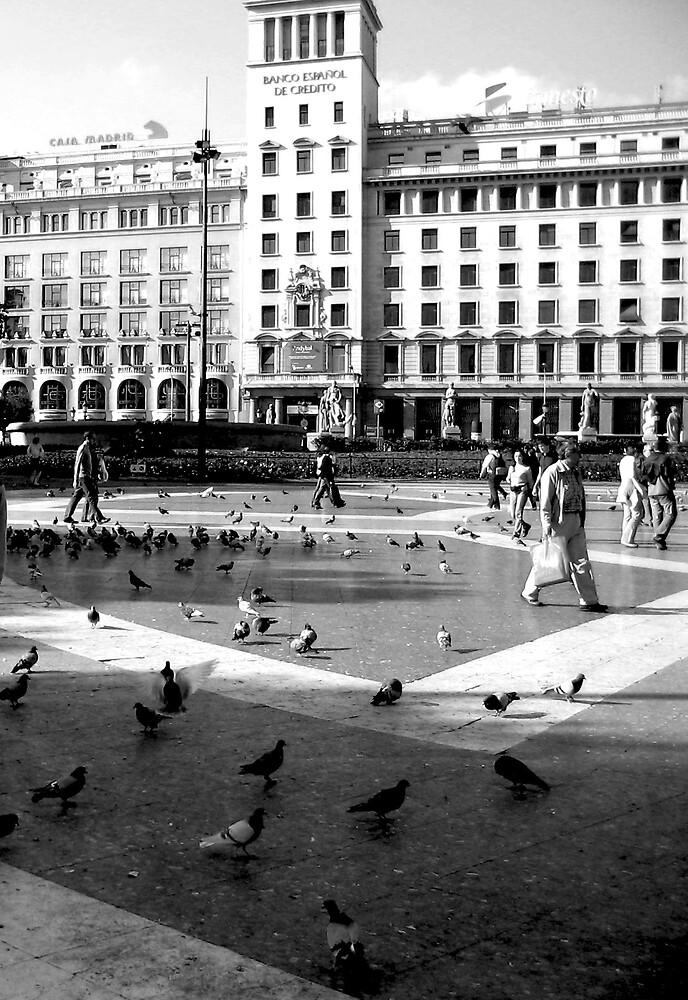 Pigeons by Danit Elgev