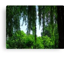 Behind the Willows Canvas Print