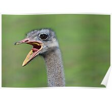 Oh my god, its an ostrich! Poster
