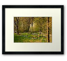 Springtime in New England Framed Print