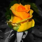 YELLOW ROSE OF IDAHO by 3DOGNIGHT