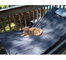 The hammock Photographic Print