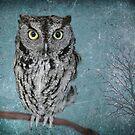 Screech Owl by Kimberly Palmer