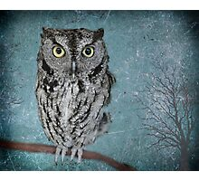 Screech Owl Photographic Print