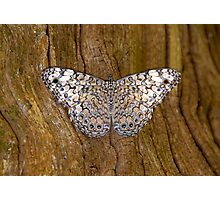 Variegated Beauty Photographic Print