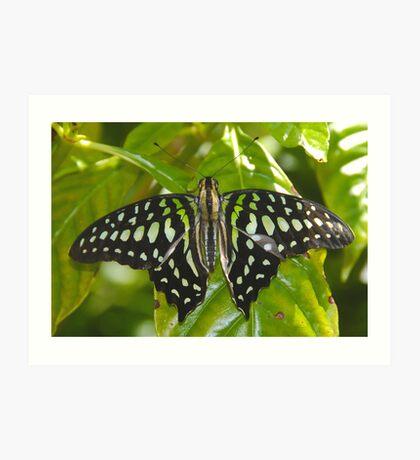 Green Leaf Butterfly Art Print