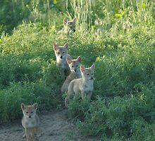 Coyote Clan by Luann wilslef