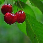 summer rain by Jeannie Peters