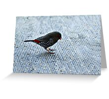 Red-eared Firetail Greeting Card