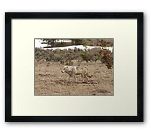 Canis Lupus Framed Print